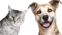 английский урок cat and dog