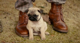 Kingsman: The Secret Service. Puppy